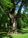 Behin l'arbre Images stock
