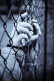 Behind bars Royalty Free Stock Photo