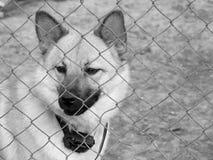 Behind bars Royalty Free Stock Photography
