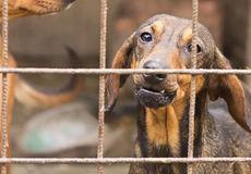Behind the bars. Dog behind the metal bars looking out Royalty Free Stock Photos