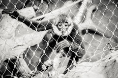 Behind bars Stock Image