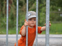 Behind the fence Royalty Free Stock Image