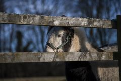 Behind the Fence . Horse behind the fence with beautiful blue sky Stock Photo