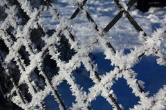 Behind the frozen fence. Frozen fence in a cold morning Stock Images