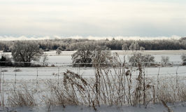 Behind an Ice-covered Fence, a Field of Snow, and Snow-covered Trees Stock Photos