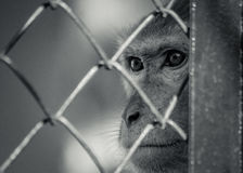 Behind The Net. The only thing left of freedom is a light in the eyes Royalty Free Stock Photo