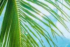 Behind a palm tree the sun and sea stock photo