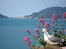 Behind the seagull a view of the famous gulf of the poets royalty free stock photography