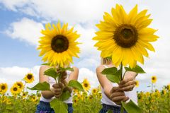Behind sunflowers. Portrait of cute girls hiding behind sunflowers on sunny day Stock Photography