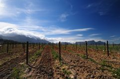 Behind Table Mountain. View from southern steenberg vineyards towards back of Table Mountain Royalty Free Stock Images