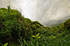 Behind the waterfall. Wet grass behind a falling water of a big waterfall Royalty Free Stock Images