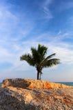 Behine del coco la piedra Imagenes de archivo