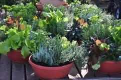 Behälter-Gartenarbeit Lizenzfreies Stockfoto