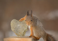 Beholder of the heart. Red squirrel holding a heart of stone Stock Photo