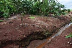 Behoud van kleine rivier in landelijk bezit De rivierlente in Brazilië Bos rond de rivier Gebieds milieubehoud stock fotografie