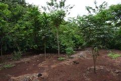 Behoud van kleine rivier in landelijk bezit De rivierlente in Brazilië Bos rond de rivier Gebieds milieubehoud stock foto's