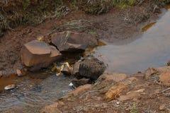 Behoud van kleine rivier in landelijk bezit De rivierlente in Brazilië Bos rond de rivier Gebieds milieubehoud stock afbeelding