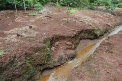 Behoud van kleine rivier in landelijk bezit De rivierlente in Brazilië Bos rond de rivier Gebieds milieubehoud stock foto
