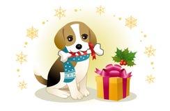 Beißender Farbbandknochen des Spürhunds mit Weihnachtsgeschenk Stockfotografie