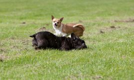 Beißender Hund lizenzfreies stockfoto