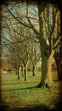 Bei alberi Immagini Stock Libere da Diritti