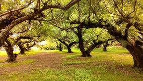 Bei alberi Fotografie Stock