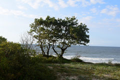 Bei alberi Fotografie Stock Libere da Diritti