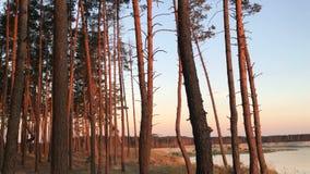 Bei alberi contro il cielo nella sera e nel tramonto archivi video