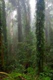 bei alberi della foresta pluviale fotografie stock