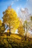 Bei alberi di autunno Fotografia Stock Libera da Diritti