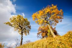 Bei alberi di autunno Immagini Stock Libere da Diritti