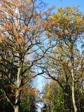 Bei alberi di autunno, Lituania Fotografie Stock Libere da Diritti