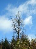 Bei alberi di autunno, Lituania Immagine Stock Libera da Diritti