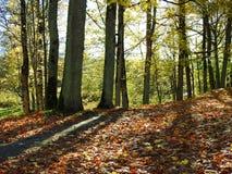 Bei alberi di autunno, Lituania Immagini Stock Libere da Diritti