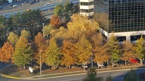 Bei alberi di caduta Immagine Stock