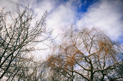 Bei alberi e cielo Immagini Stock