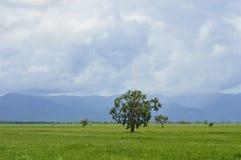 Bei alberi in mezzo ai campi fotografia stock libera da diritti