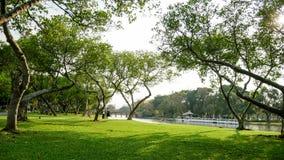 Bei alberi naturali nel parco vicino al fiume, alla barca ed al ponte Fotografia Stock Libera da Diritti
