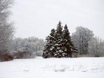 Bei alberi nevosi, Lituania Fotografia Stock