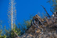 Bei alberi senza vita Fotografie Stock Libere da Diritti