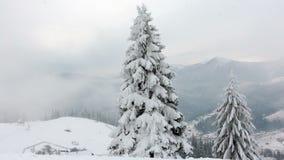 Bei alberi stessi congelati Racconto di inverno Paesaggio da ammirare montagne superbe stock footage