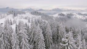 Bei alberi stessi congelati Racconto di inverno Paesaggio da ammirare montagne superbe video d archivio