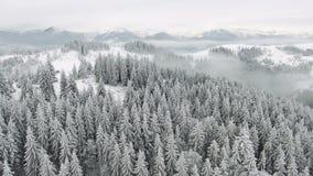 Bei alberi stessi congelati Racconto di inverno Paesaggio da ammirare montagne superbe archivi video