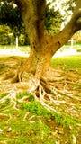 Bei albero, tronco di albero e cespugli con l'immagine di sfondo di effetto della luce del sole e la progettazione naturali della fotografia stock