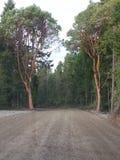 Bei BC alberi Immagine Stock