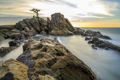 Bei bonsai, circa 15 miglia dal centro urbano Fotografia Stock