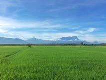 Bei campi verdi con la vista del Monte Kinabalu e del cielo blu Fotografie Stock