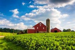 Bei campo dell'azienda agricola e granaio su un boschetto vicino della primavera dell'azienda agricola, Penns Fotografia Stock