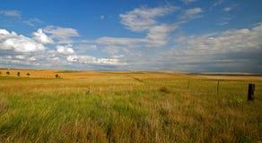 Bei campo e cieli blu di erba Immagini Stock Libere da Diritti