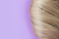 Bei capelli Capelli marrone chiaro I capelli si sono riuniti in un panino su un fondo lilla con spazio libero per testo Per un ma fotografia stock libera da diritti